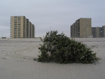 Abandoned Christmas Tree, Rockaway Beach, January 2, 2005