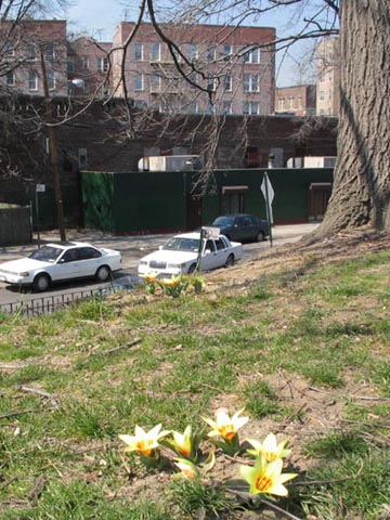Williamsbridge Oval, Norwood, The Bronx, March 30, 2006