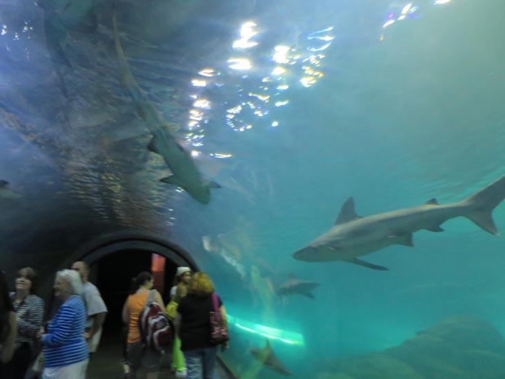 Adventure Aquarium, 1 Riverside Drive, Camden, New Jersey